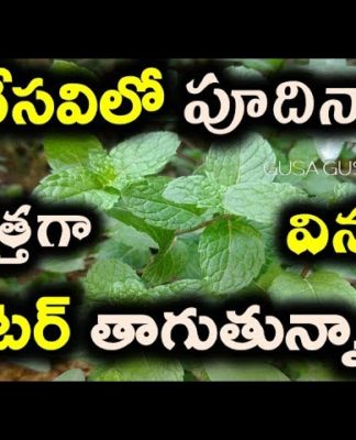 Health benefits of mint | podina for weight loss | lose belly fat | thick hair | Summer health tips